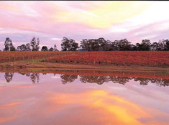 A Day in Hunter  Valley