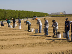 California Grapegrowers Brace for New Illegal Immigrant Law