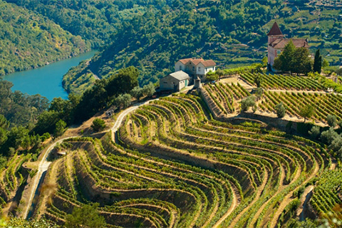 The Wines and Vineyards of Portugal