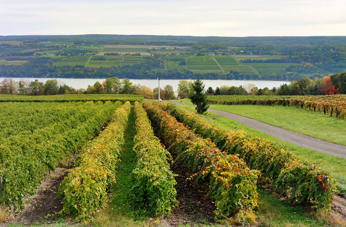 New York State Red Wines