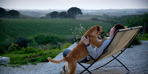 9 Dog-Friendly Wineries