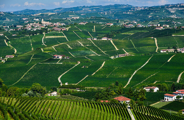 Barolo Vineyards