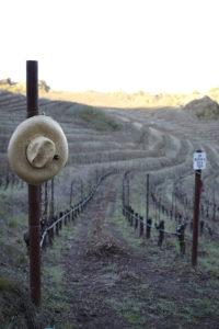 Taking a stroll through Cain Vineyard & Winery / Photo courtesy Cain