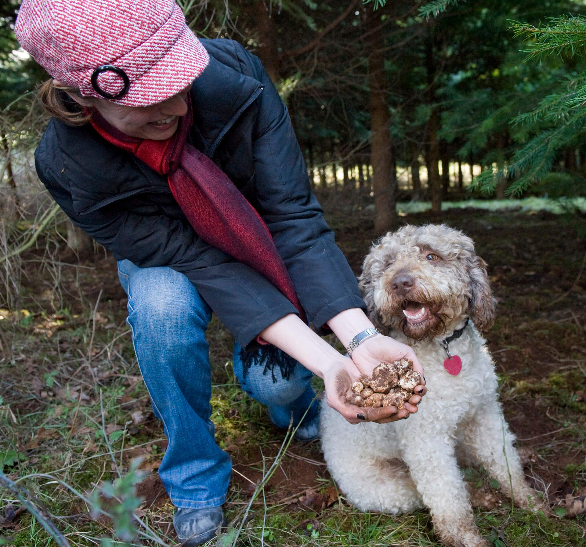 Dog who has found Oregon truffles.