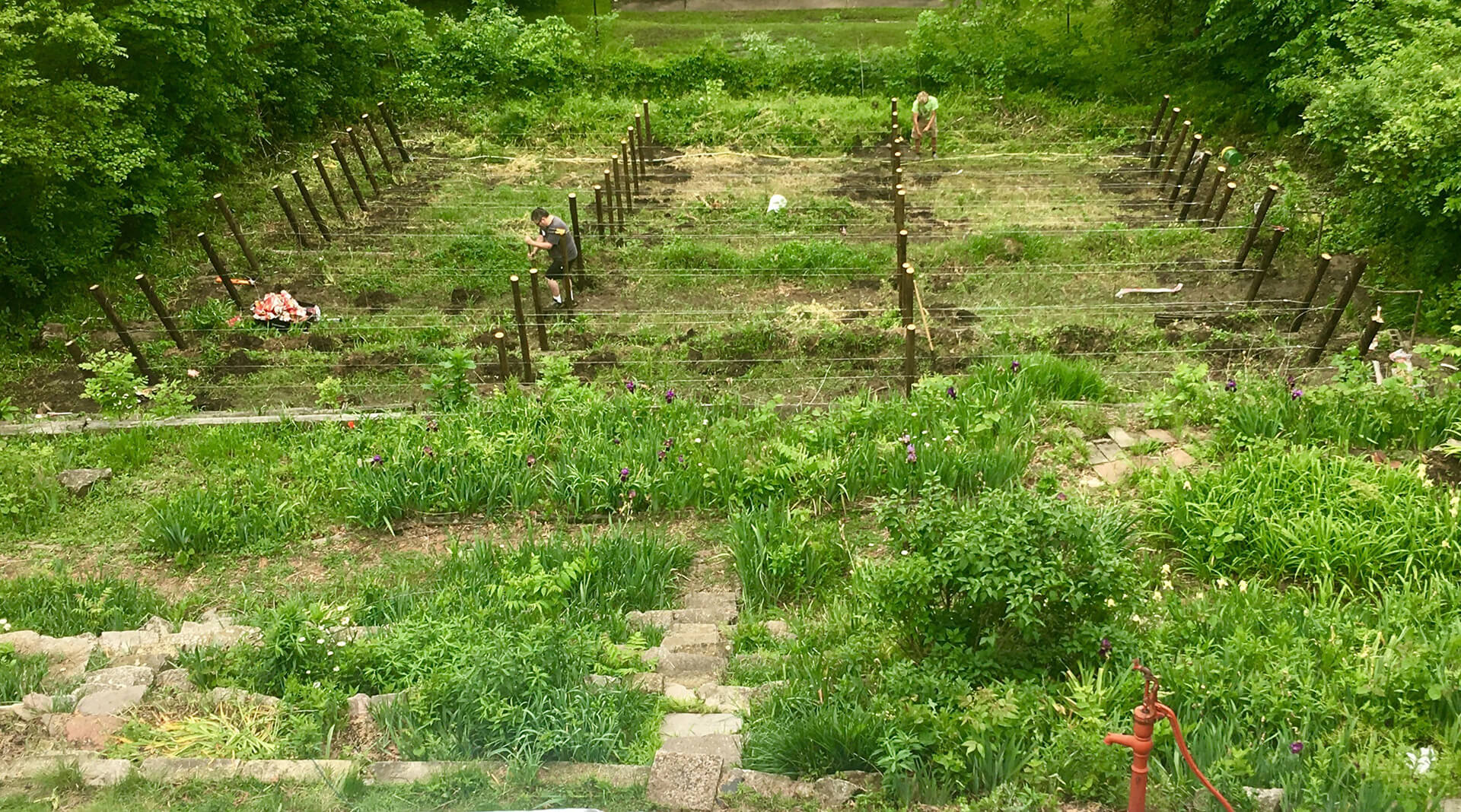 Rows being prepared for planting