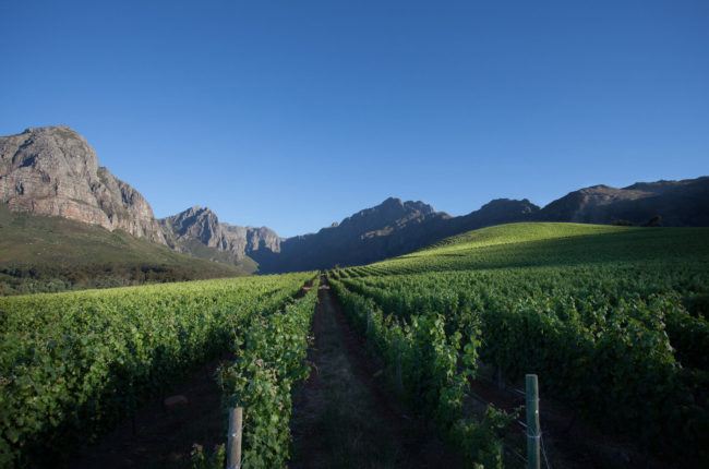 Explore the 2015 vintage of South African Wine
