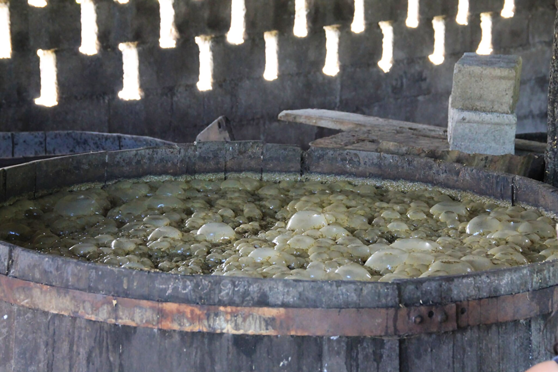 Pressed sugarcane juice naturally fermenting / Photo by Ralph Thomassin Joseph
