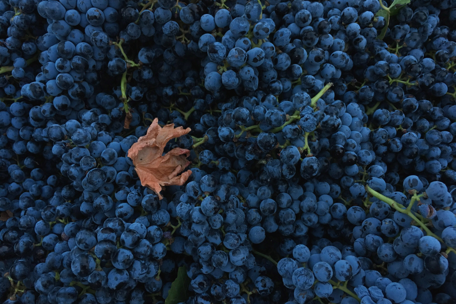 Everything You Never Knew About the Wines of Austria