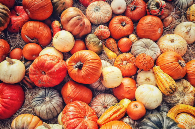 A large variety of pumpkins