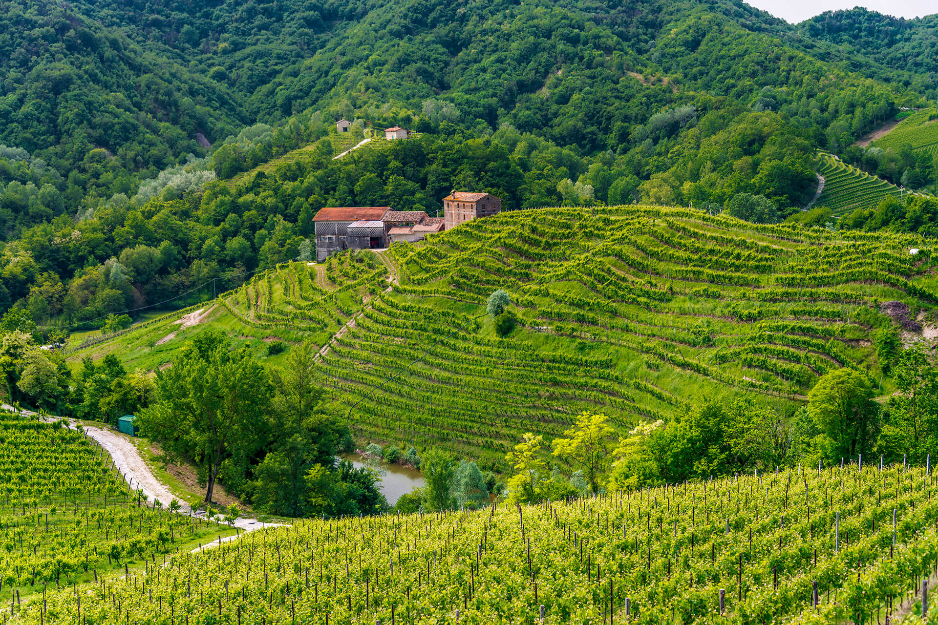 Duca Di Dolle vineyard in Conegliano-Valdobbiandene / Getty