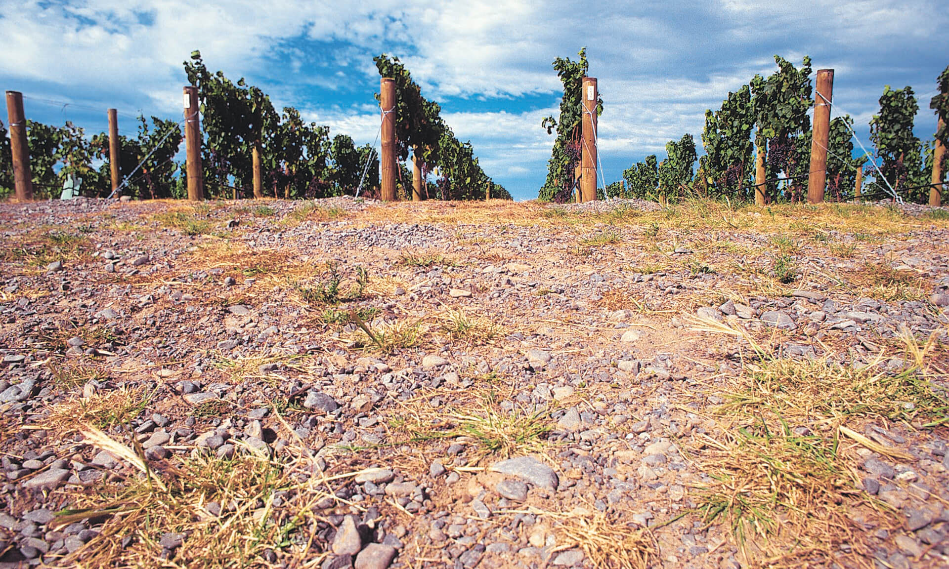 Foreground of soil with rock embedded in it, vines in the background