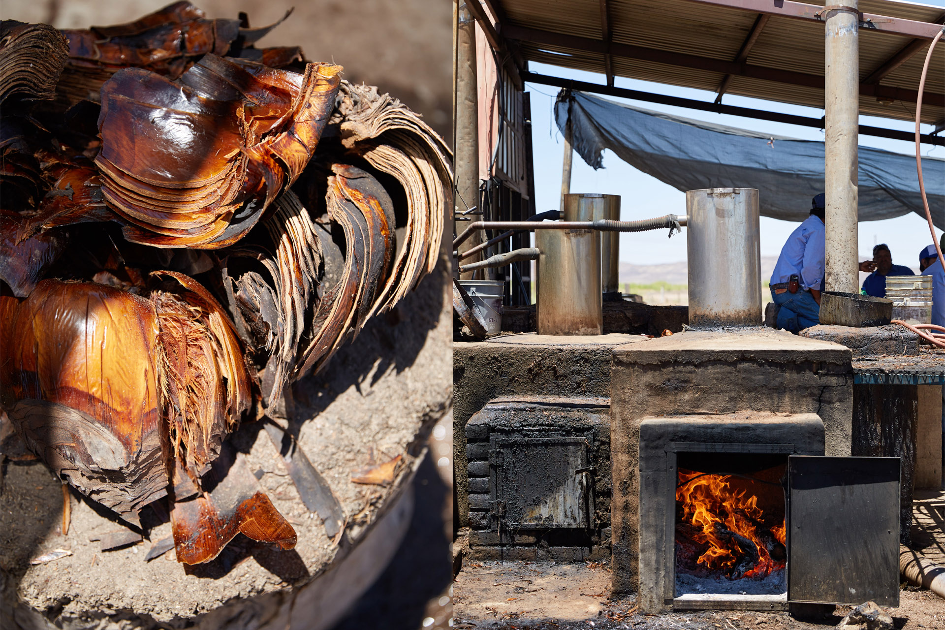 Hearts of the desert spoon plan, and traditional roasting oven / Photo by Max Kelly, courtesy Sotol Por Siempre