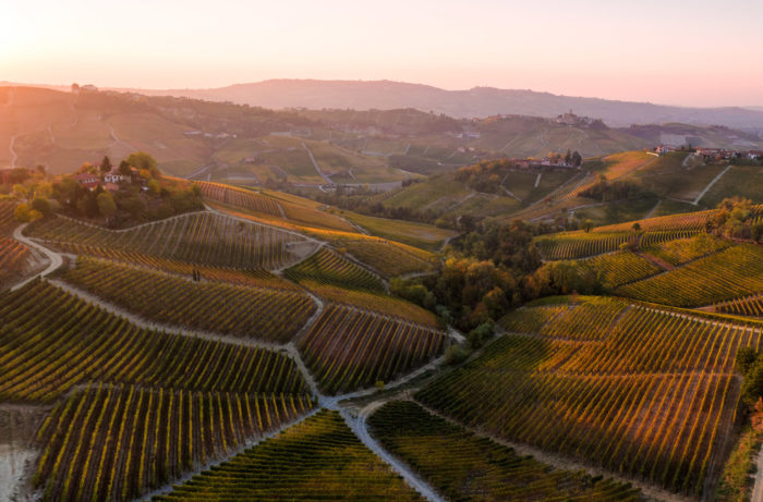 A Beginner's Guide to Wines from Italy's Piedmont