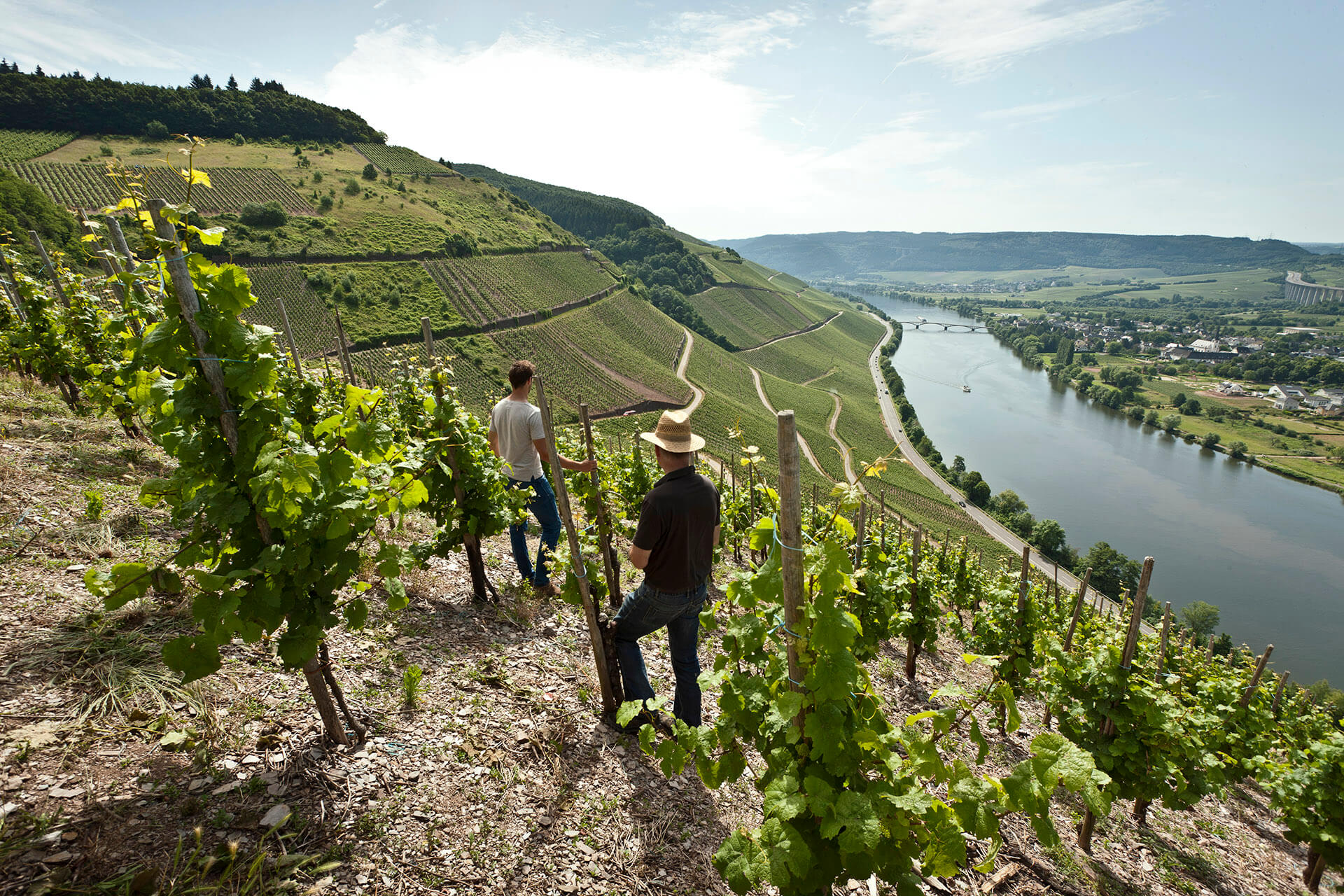 Two men amid staked vines on a steep hillside over a river