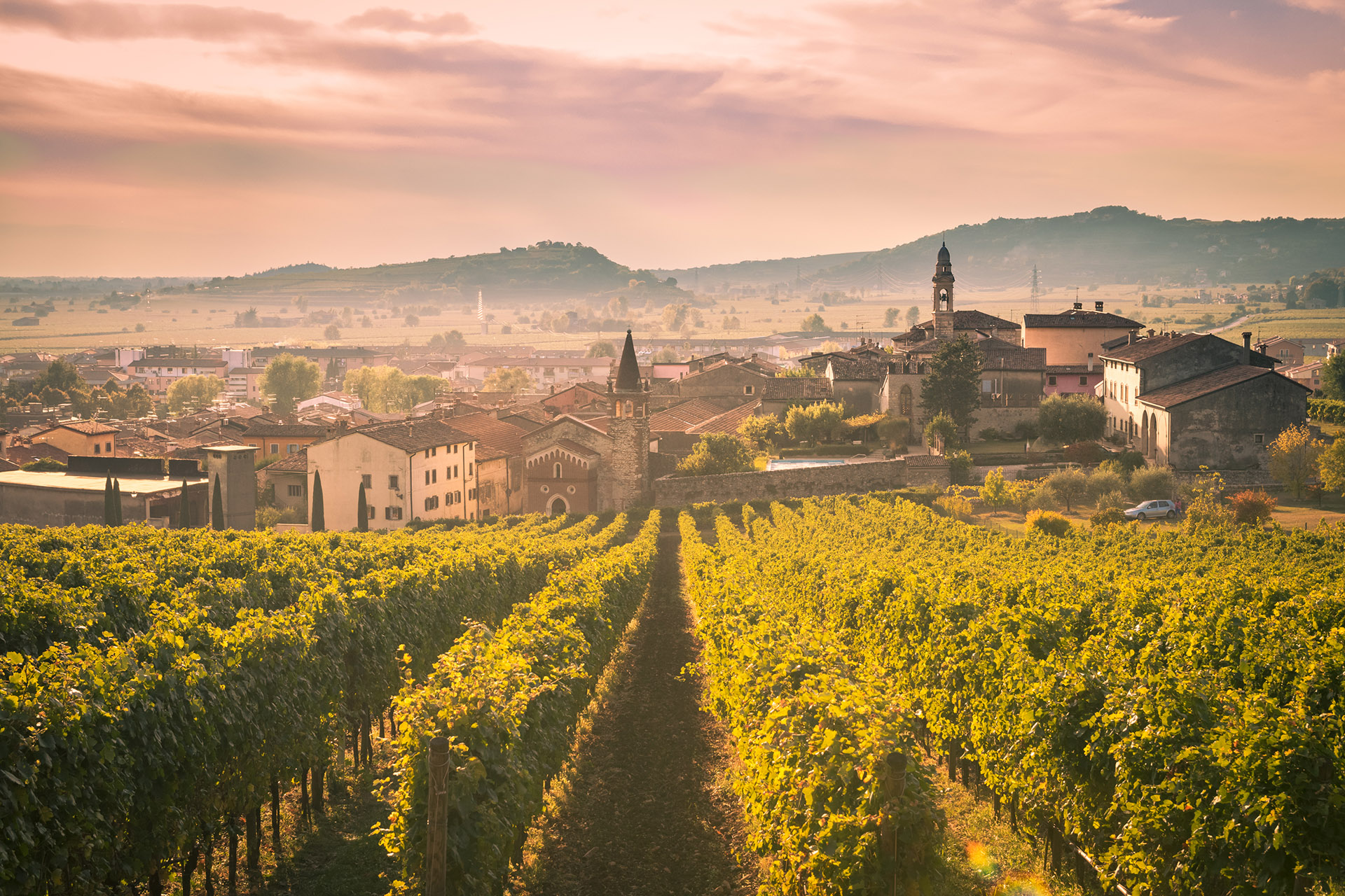 Vineyards in foreground, hazy Italian town in background