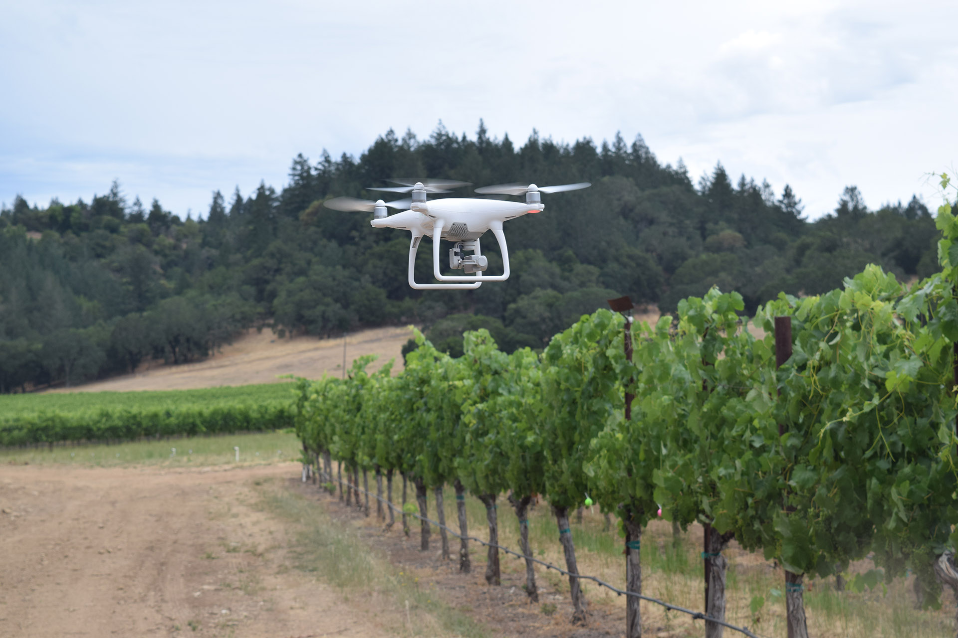 A white dron flying directly above a row of vines