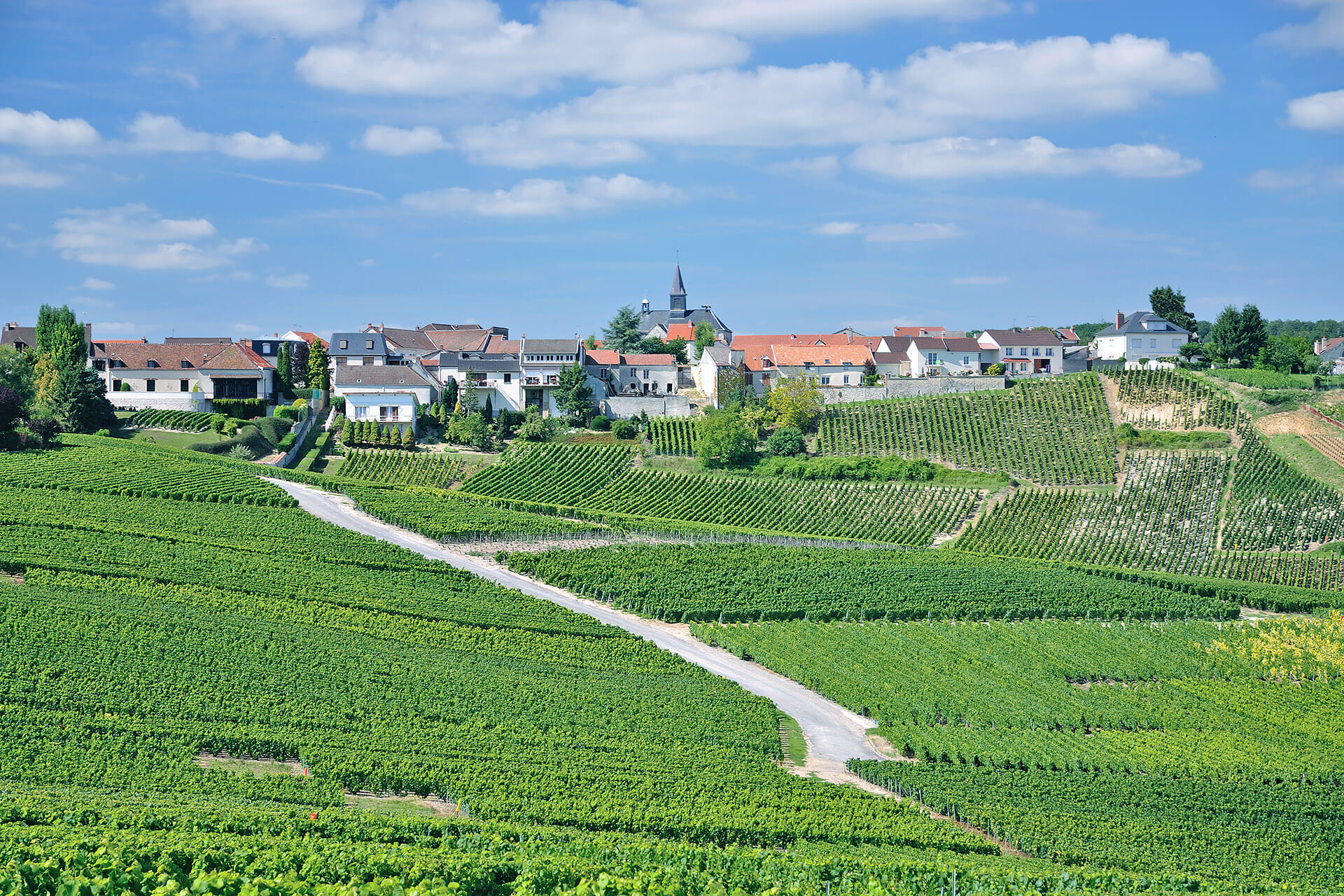 A view of a vineyard with a town in the background