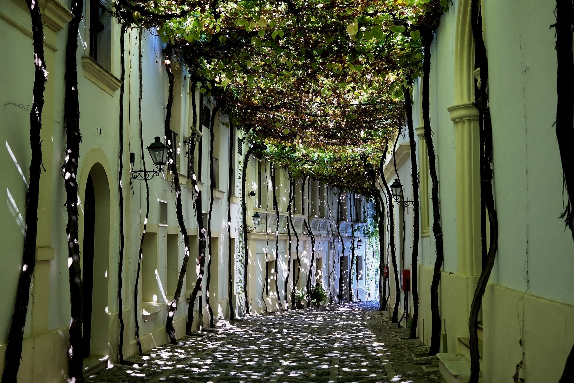 Alleyway covered by grape vines, sunlight peeking through