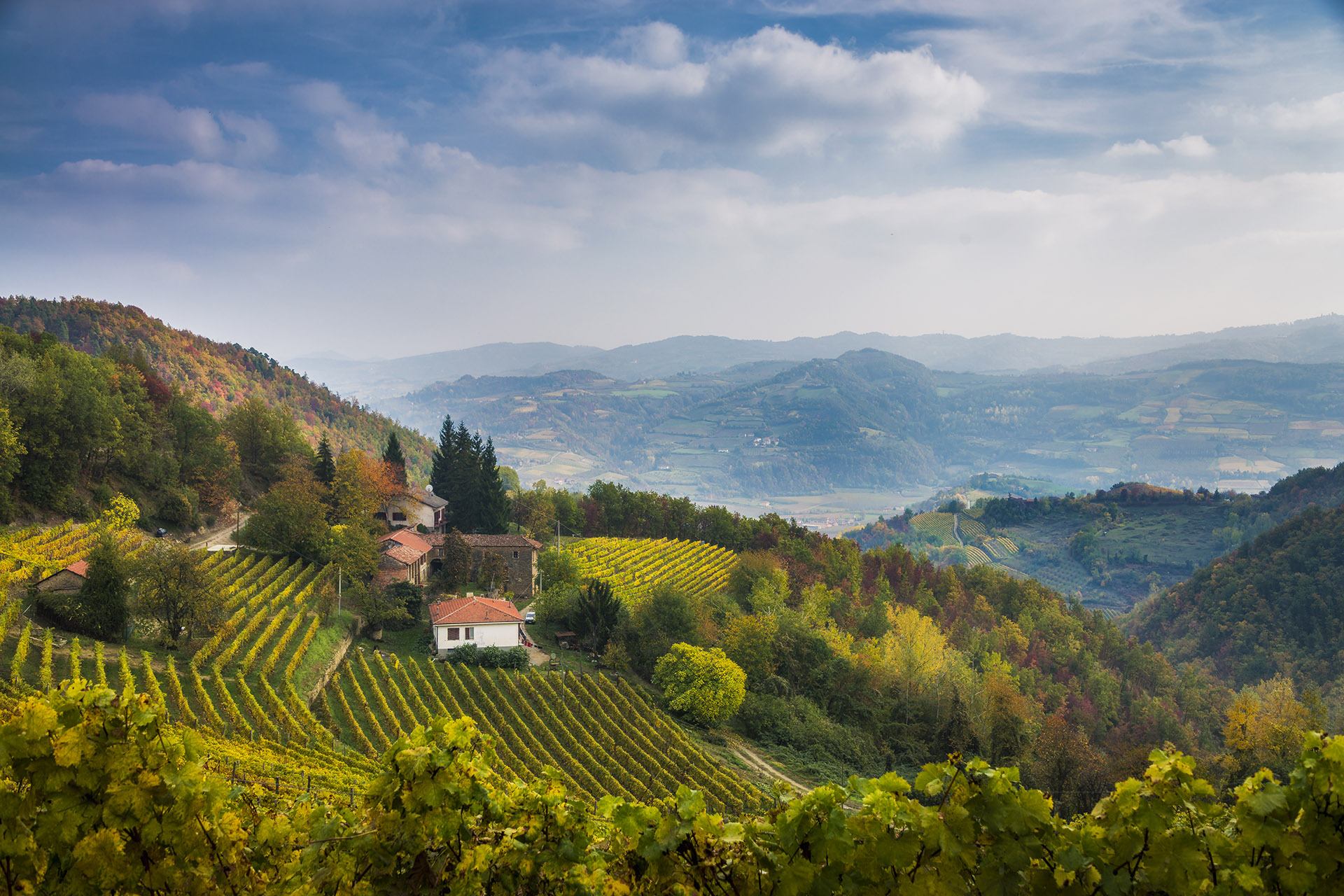 Gorgeous Italian villas on a hill with vineyards