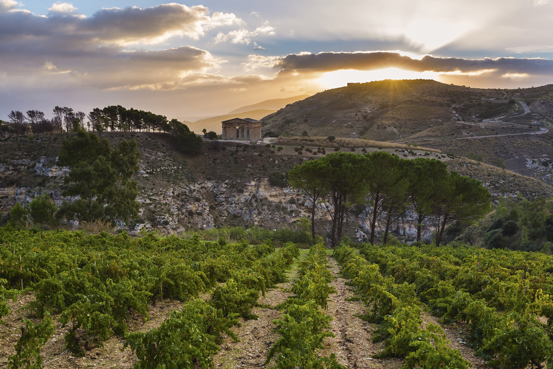 A Beginner's Guide to Italian Wine