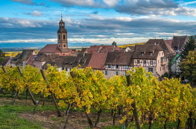 Vineyards in Alsace, France