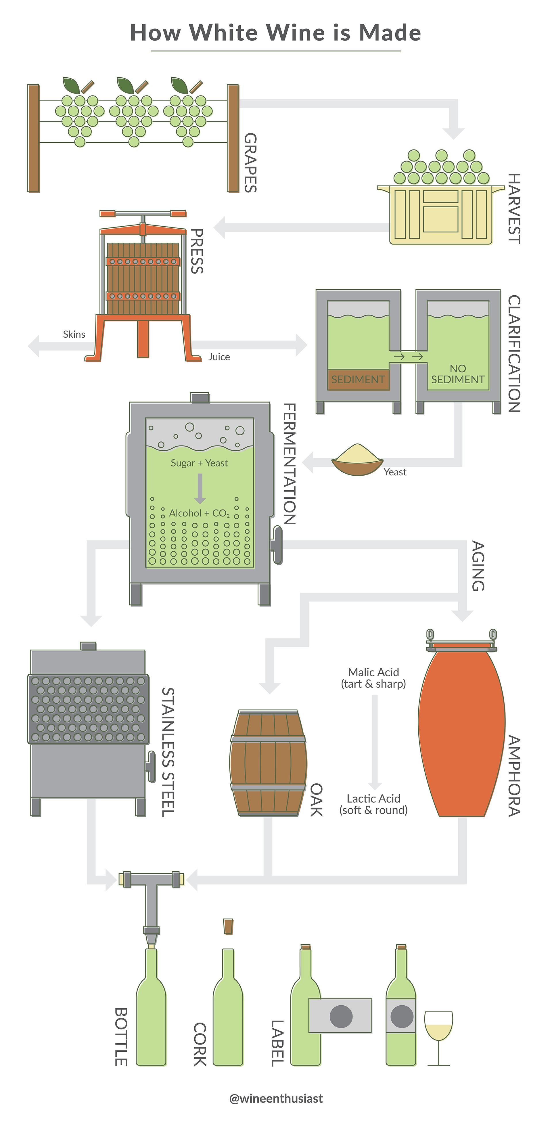 Infographic of the steps that going into how white wine is made