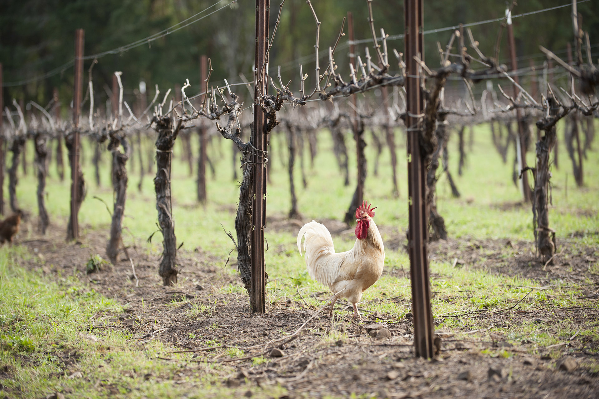 What's the Difference Between Organic and Biodynamic Wine?