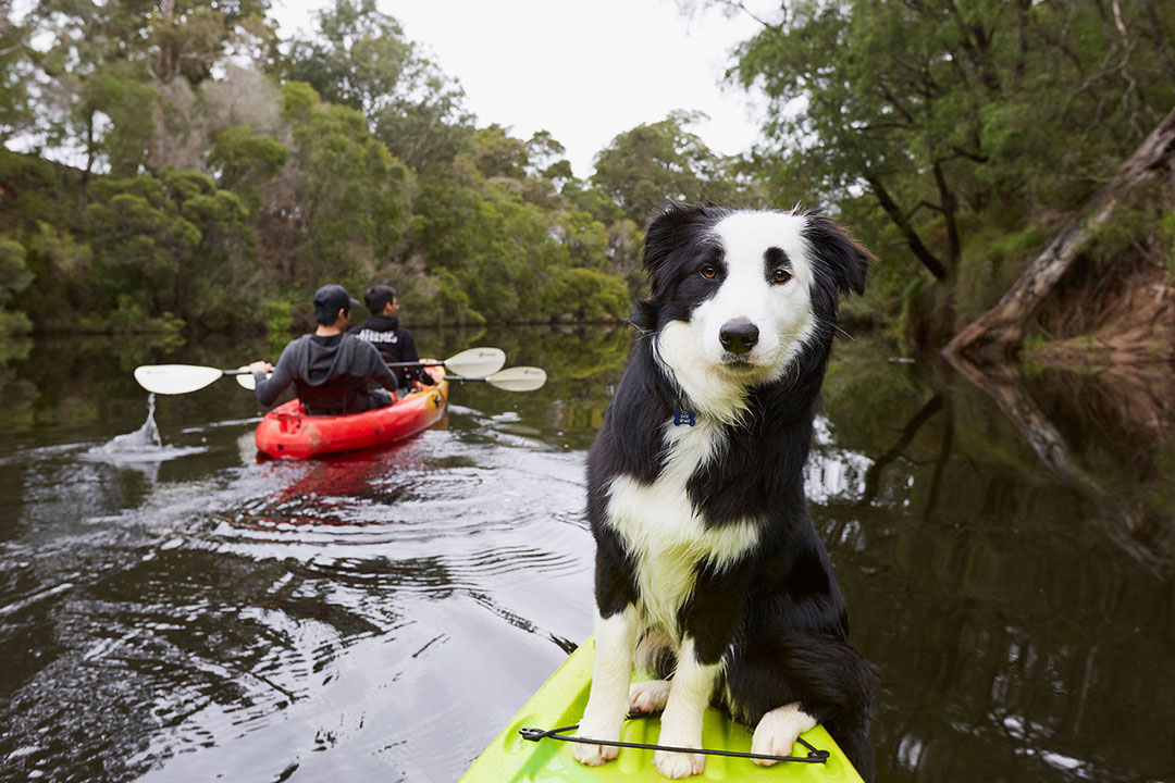 A cute dog on a kayak in a river