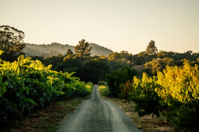 Martha's Vineyard in Oakvilla, Napa