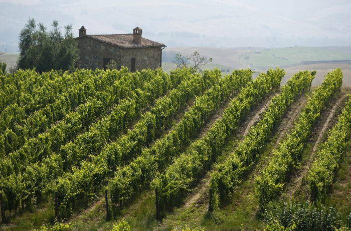 Buyer Beware: Everything You Need to Know About the 2015 Brunello Vintage