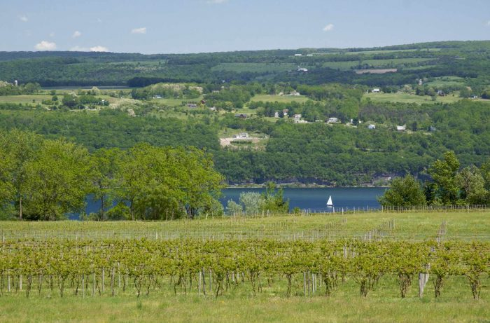 A vineyard in New York