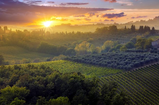 sunset over Italian vineyard
