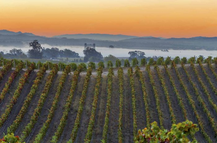 Napa Valley vineyard at sunrise