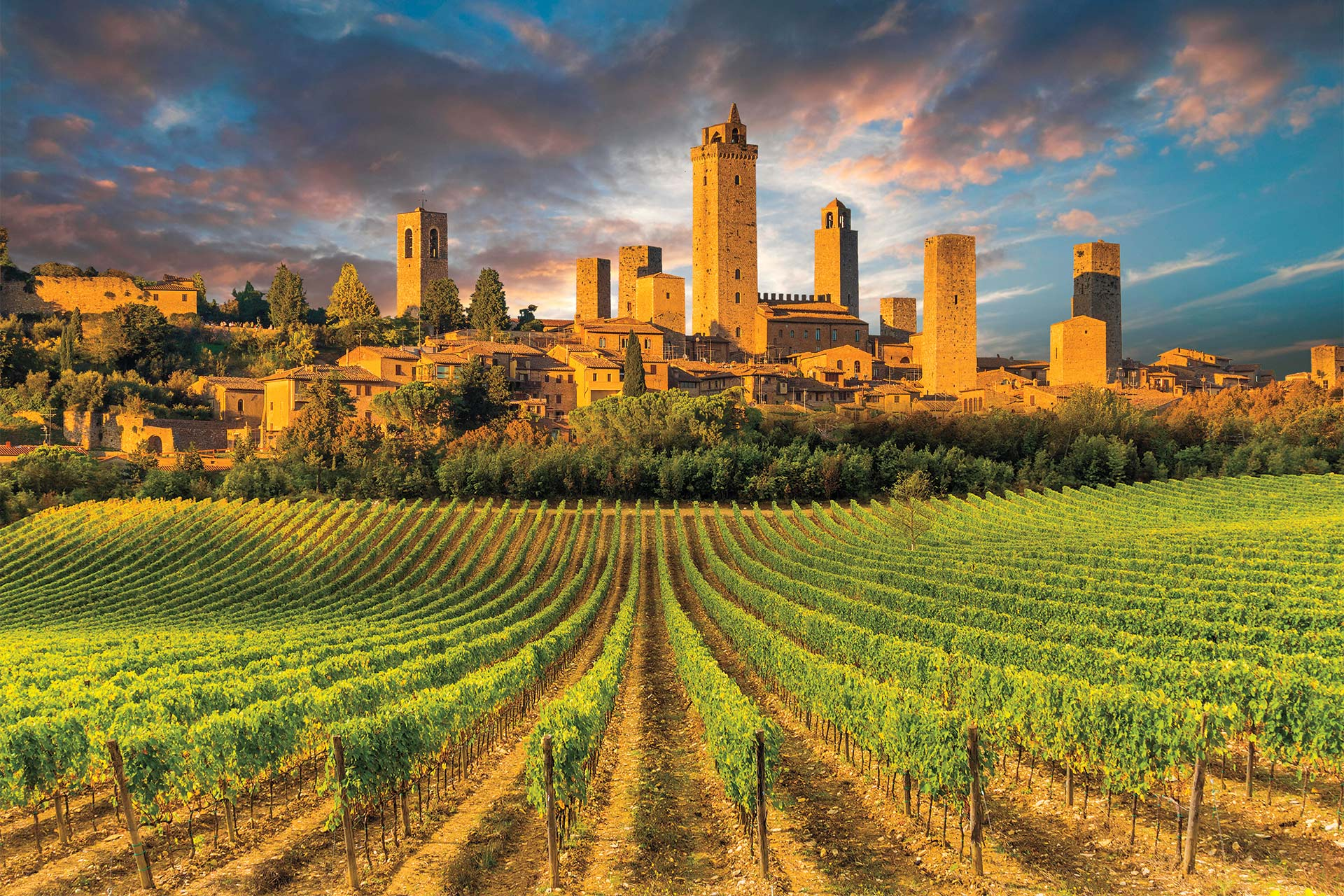 Vineyards on the outskirts of the city of San Gimignano