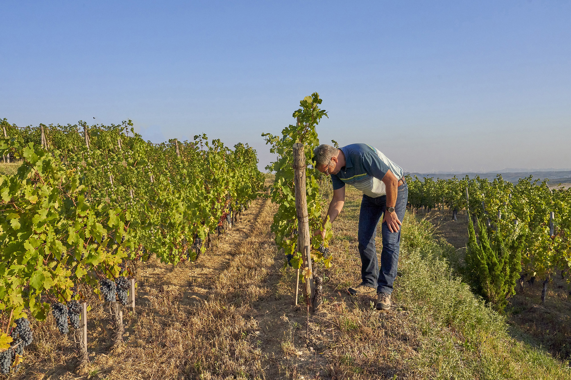 Trégoat on location in the vineyard / Photo by Richard Haughton
