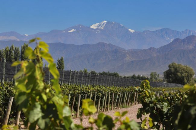 vineyard in front of Andes