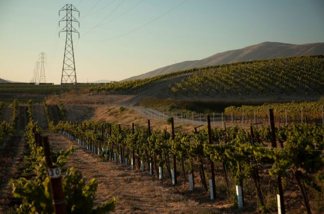 Central Coast vineyard with power tower in background