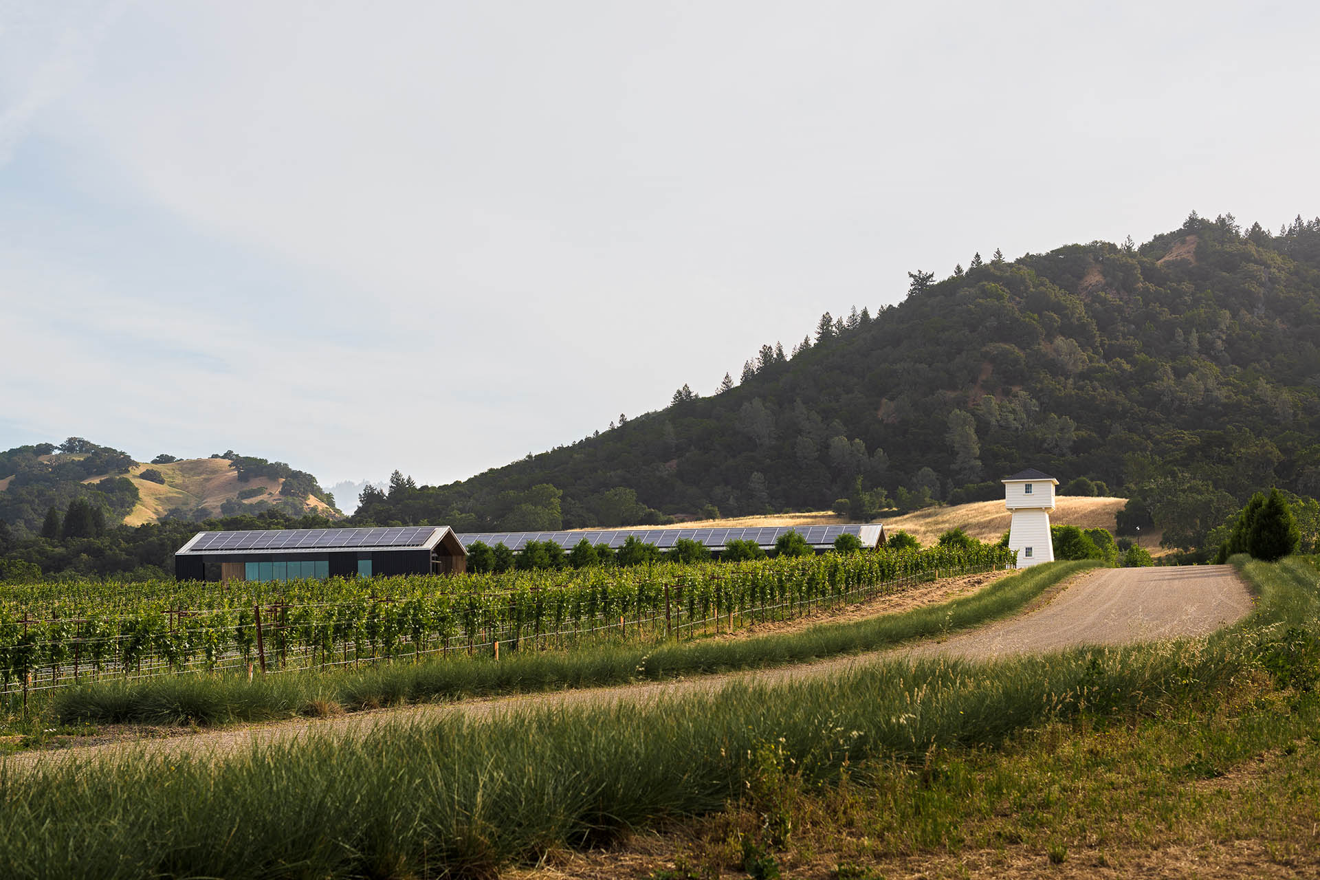 Silver Oak complex in background with vineyards and dirt road in foreground