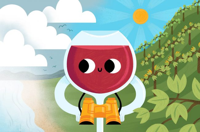 Illustration of microclimate red wine